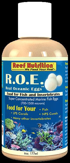 Real Ocean Eggs 32oz