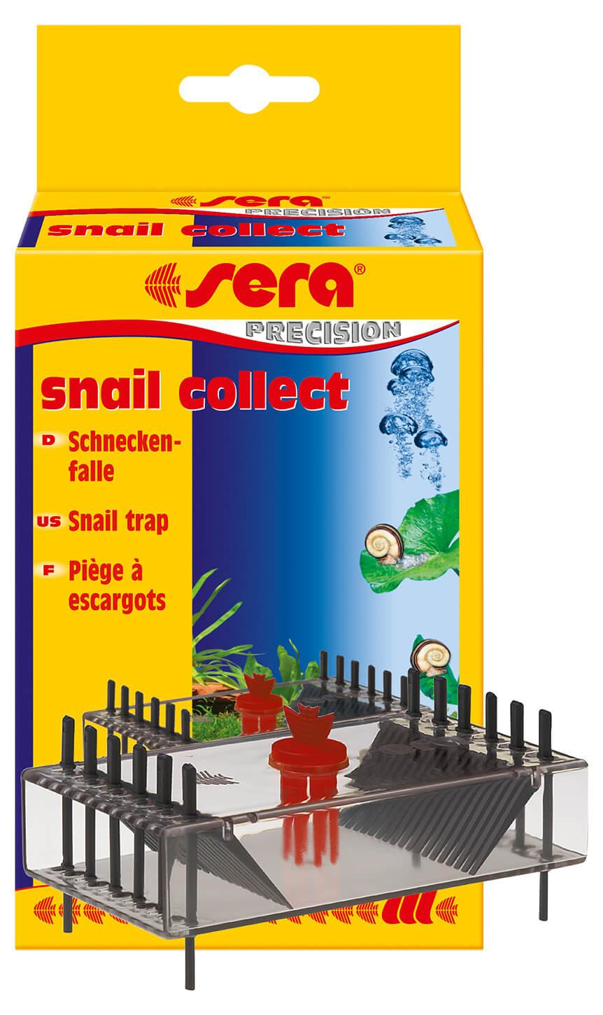 Snail Collect 1 Pc.